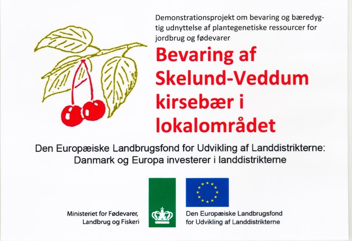 Bevaring af Skelund-Veddumkirsebær i lokalområdet